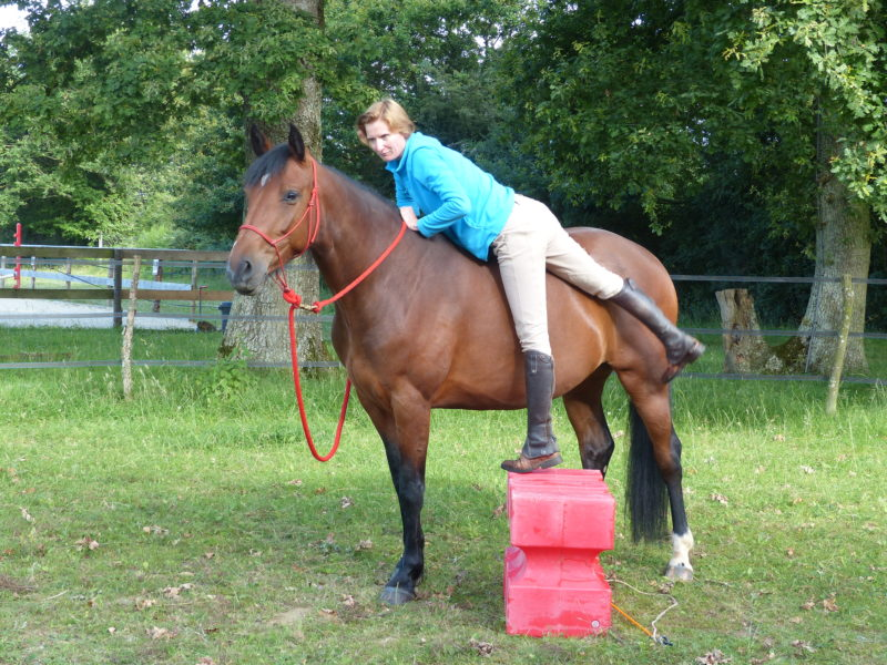 Equitation éthologique, cheval, Nantes, Rennes, centre équestre